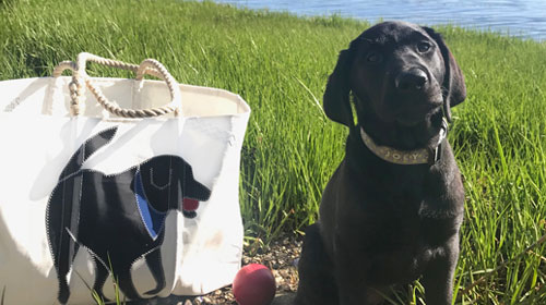 The Dogs Of Sea Bags
